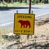Several of these signs.  Each one shows where a bear has been killed by a car.