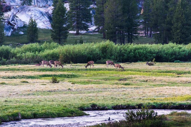 We often saw deer in meadows at dusk.