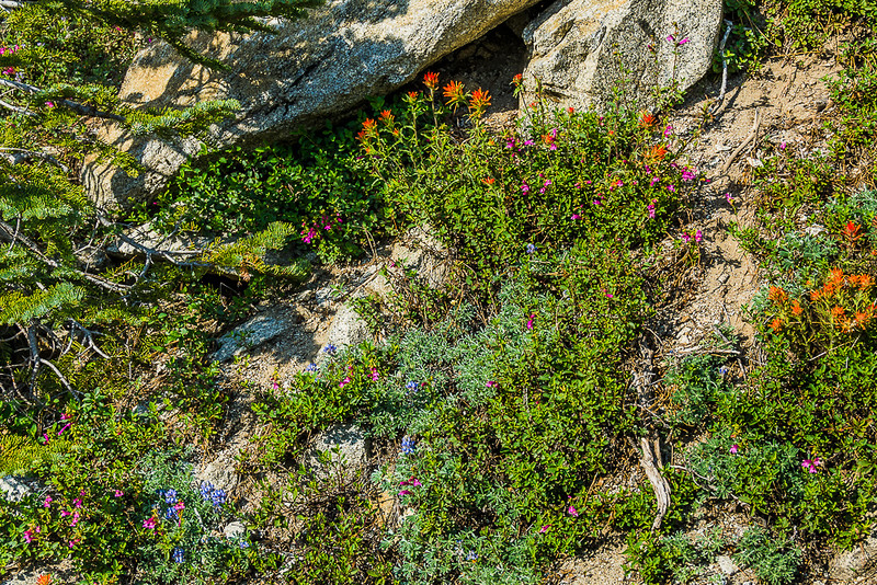 I think there were 4 different wildflowers in this cluster on Tioga Road.