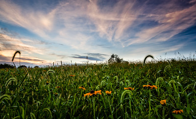 Wildflowers and Sunrise