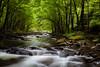 27 - Smoky Mountain Stream