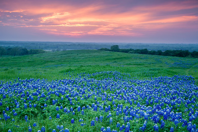 9 Place 15 - Bluebonnet Sunrise