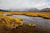 37 - Golden Stream