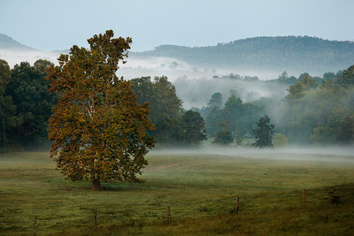 24 Foggy Morning