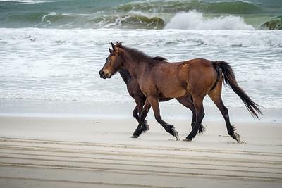 #29 Wild Horses on Corolla