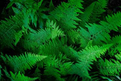 15 Fern Forest