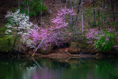 32 Spring in Tennessee