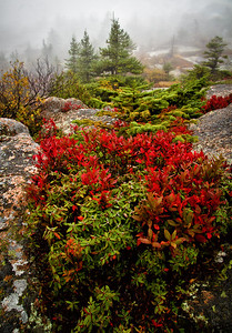 Cadillac Mountain in the Rain