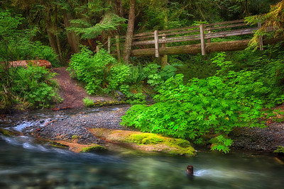 Bridge Over Stream Olympic National Park