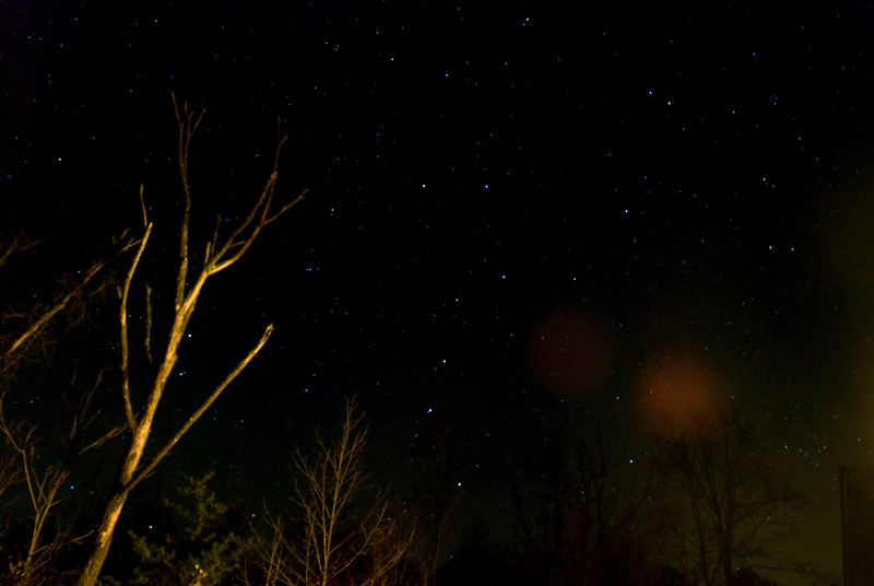 The Big Dipper oriented vertically with trees in the foreground. (The red spot to the right is due to light reflections within the camera lens.)