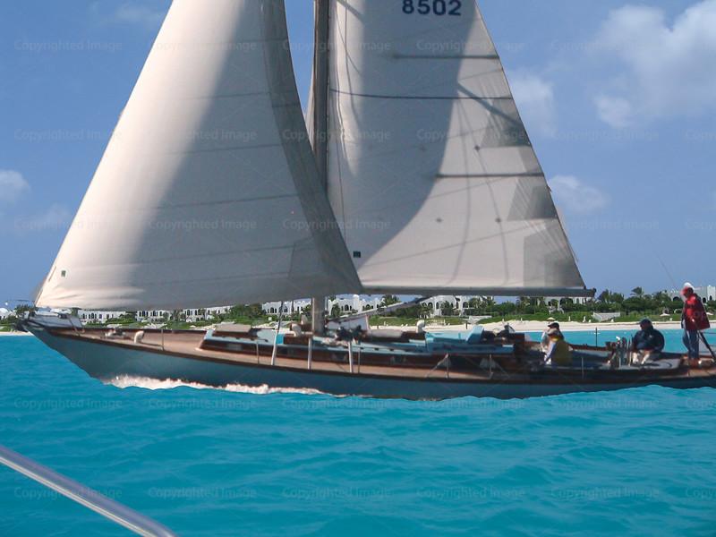 CRay-Alpha-Anguilla
