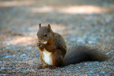 Ist dies der Eichhörnchenweg?