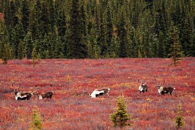 Denali National Park, Alaska September 2011