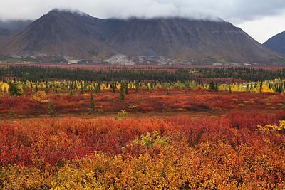 Near Cantwell, Alaska September 2011