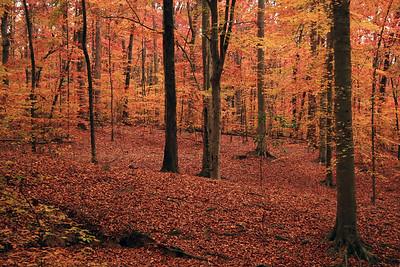 Decatur, Georgia November 2007