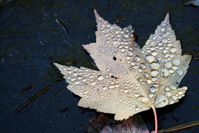 Nantahala National Forest, North Carolina October 2007