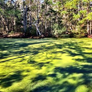 Nags Head Woods Preserve, Kill Devil Hills, North Carolina