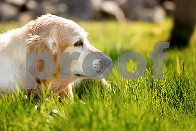 Abby - Dog