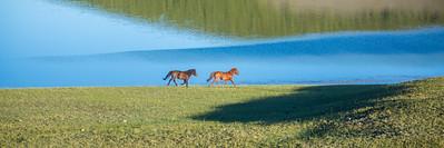 Horses in Mongolian landscape
