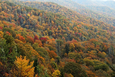 Great Smoky Mountains National Park, NC