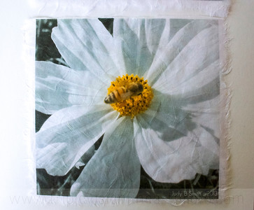 3+bees+white+cosmo_MG_8631-3543282364-O