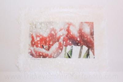fringe+on+lace+IMG_5986-3543341539-O