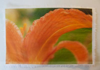 lily+orange+_MG_8829-3543526778-O