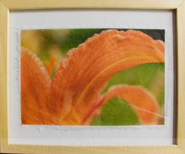 lily+orange+framed_MG_8896-3543526211-O