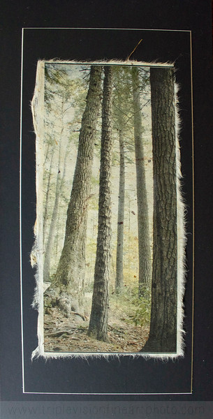 Handsome Tall Trees on natural papyrus