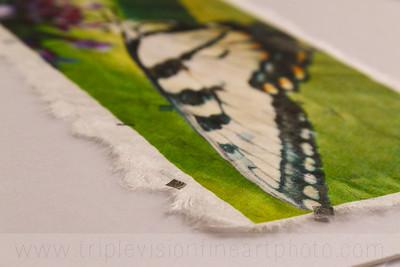 sweet+nectar+detail+2+IMG_6230-3543573877-O