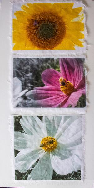 3+bees_MG_8627-3543288727-O