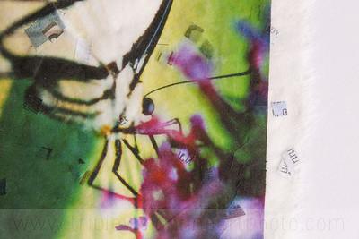 sweet+nectar+detail+1+IMG_6222-3543571314-O