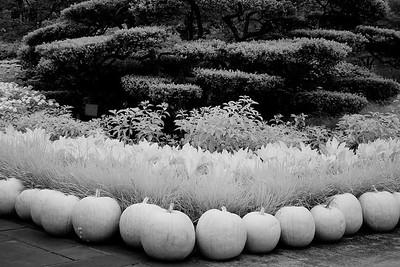 Pumpkins, #14