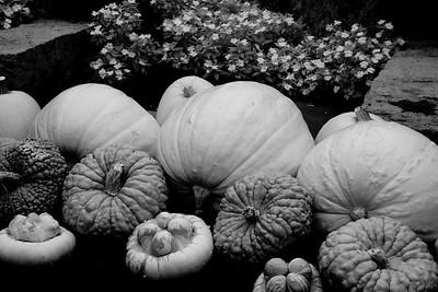 Pumpkins, #13