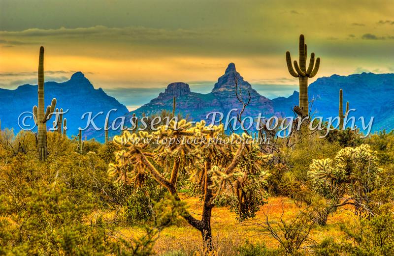 Spring wildflowers, saguaro cactus, organ pipe cactus, cholla cactus and views of Ajo mountain in Organ Pipe Cactus National Monument, Arizona, USA.