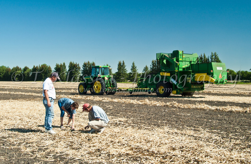 Esther Anne, Alan and Randy checking the bean harvest at the Froese farm near Winkler, Manitoba, Canada.