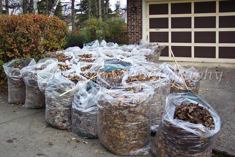 Annual fall rake-a-thon at home in 2004.