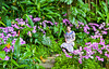 Orchids in the Singapore Botanic Gardens, East Asia.