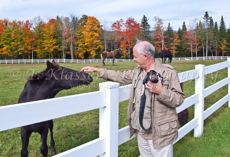 Fall foliage and horses in New York, USA.