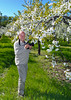 In the blossoming cherry orchards near Traverse City, Michigan, USA.
