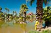 A palm oasis in near the Desert Botanical Gardens in Phoenix, Arizona, USA.