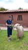 Esther Anne feeding a Llama in Peru.