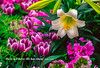An easter lily and spring flower arrangement at the Conservatory at the  Assiniboine Park in Winnipeg, Manitoba, Canada.
