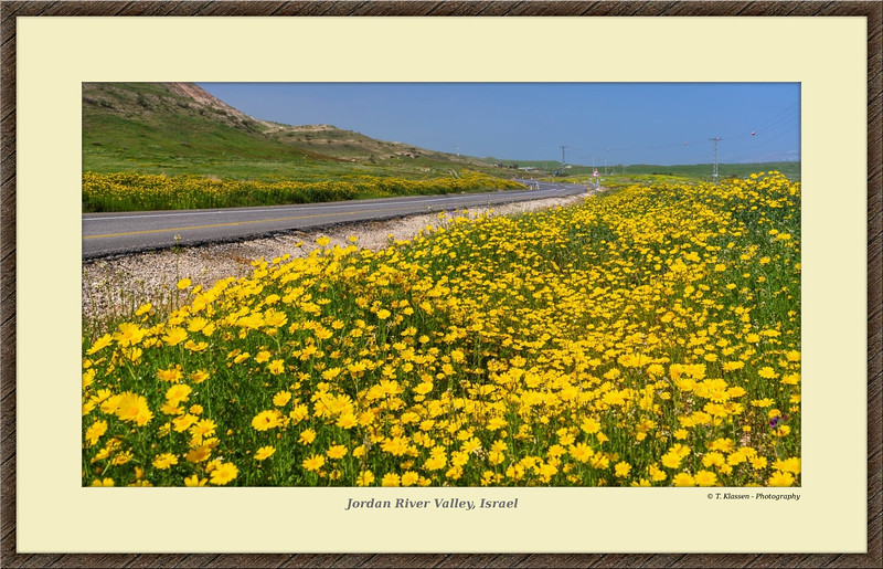Jordan River Valley, Israel the Beautiful #5