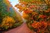 Autumn foliage colour near Marquette, Michigan, USA.