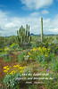 Organ Pipe and saguaro cactus with spring wildflowers in Organ Pipe Cactus National Monument, Arizona, USA