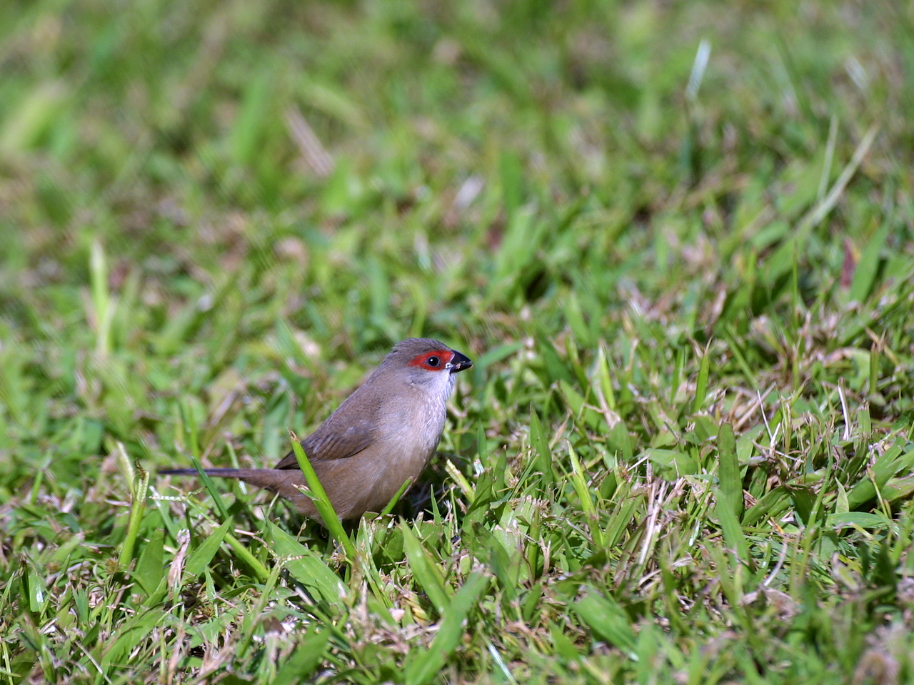 Img_6848a2