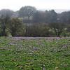 Spring Crocus, Crocus vernus subsp vernus 1. 11th March 2017. Inkpen Crocus Fields, Inkpen, West Berkshire.