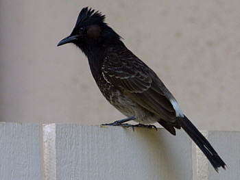 IMG_1307a2t
