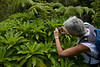 Clermontia kakeana (per HLO) on West Maui<br /> PhotoID:PT20100814_012009